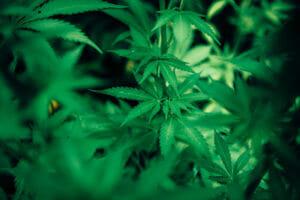 Marijuana In Trucking